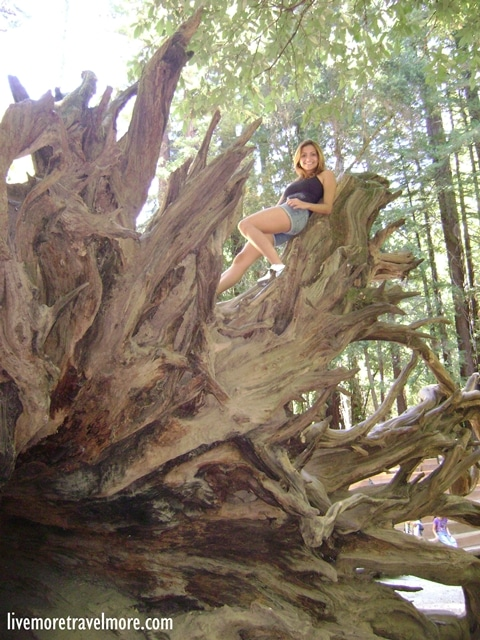 Great hiking trails in California: Redwoods – Big Basin Redwoods State Park