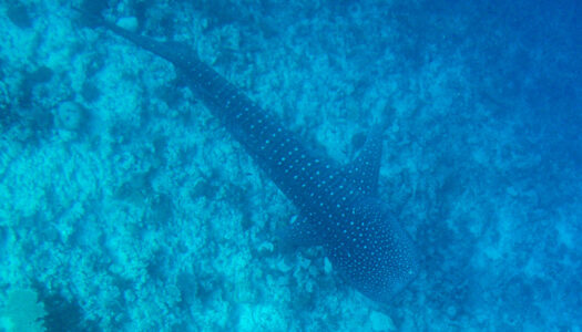 Dhigurah island, Maldives: The diver's dream