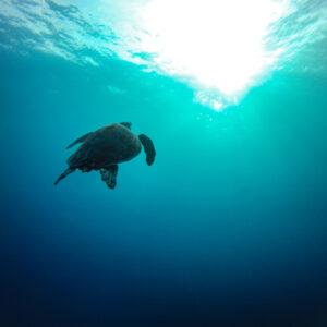 Desconto para Mergulho nas Maldivas