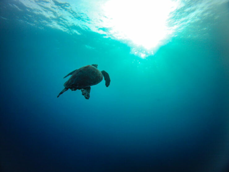 Get Discount to Scuba Dive with Dive Club Maldives