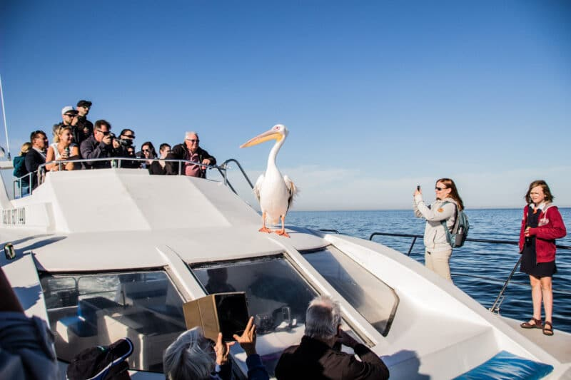 Dolphin Cruise in Walvis Bay, Namibia