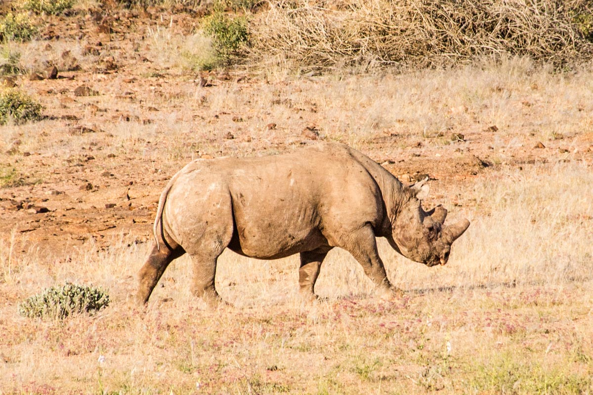 Get discount to do rhino or elephant tracking in Namibia