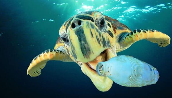 Tartaruga marinha comendo plástico
