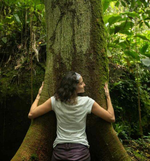 Abraço na árvore
