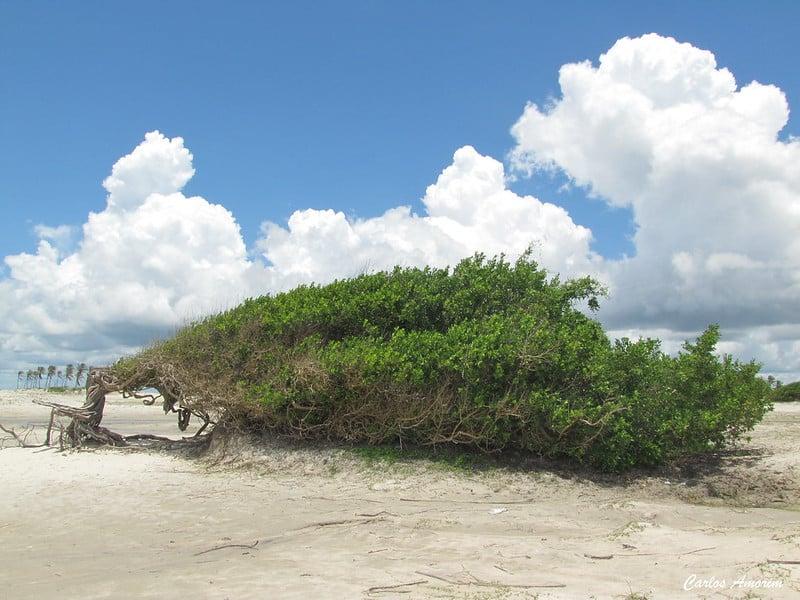 Sloth Tree Jericoacoara