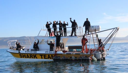 SOUTH AFRICA – WHITE SHARK CAGE DIVING DISCOUNT WITH WHITE SHARK PROJECTS
