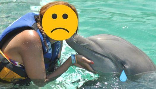 Você sabe o que está por trás do nado com golfinhos?