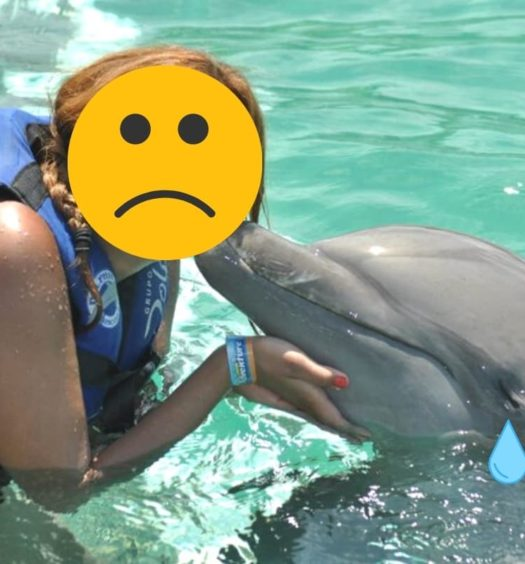 Motivos para não nadar com golfinhos