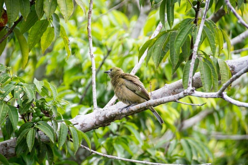 Observação de aves em Trancoso