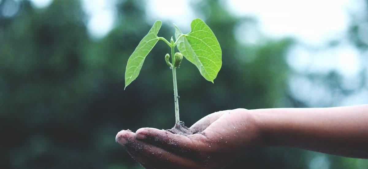 mão segurando planta